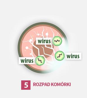 5ty etap cyklu życia wirusa