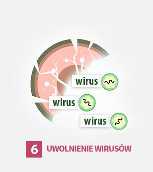 6ty etap cyklu życia wirusa