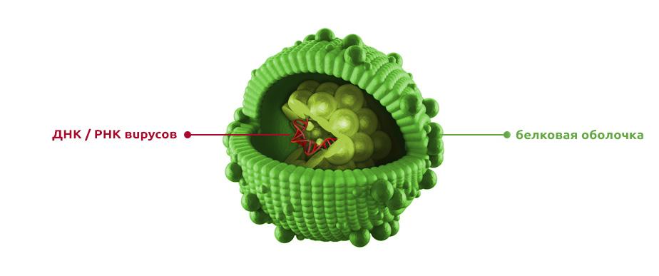 Neosine -What is avirus