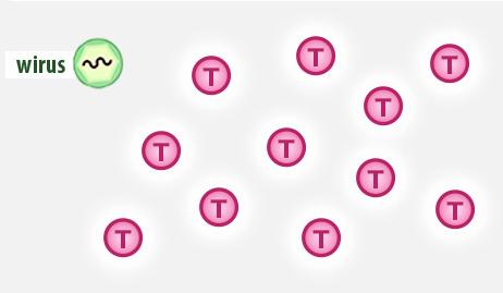 liczba limfocytów typu Tpo zastosowaniu leku przeciwwirusowego Neosine
