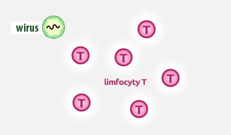 liczba limfocytów typu Tprzed zastosowaniu leku przeciwwirusowego